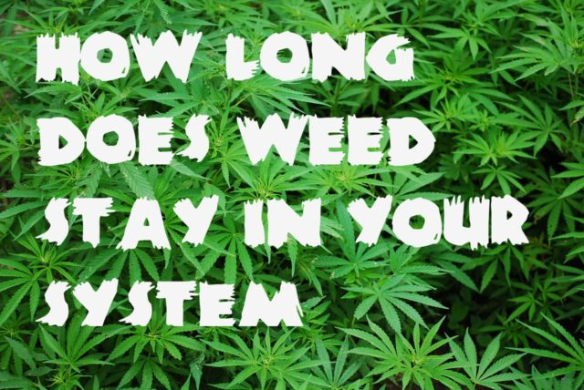 How long does weed stay in your system