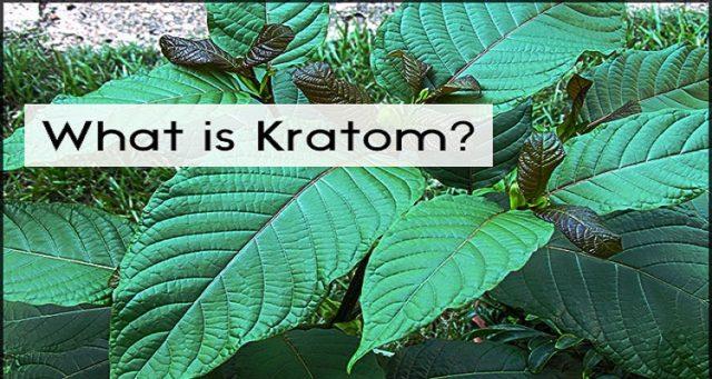 what-is-kratom