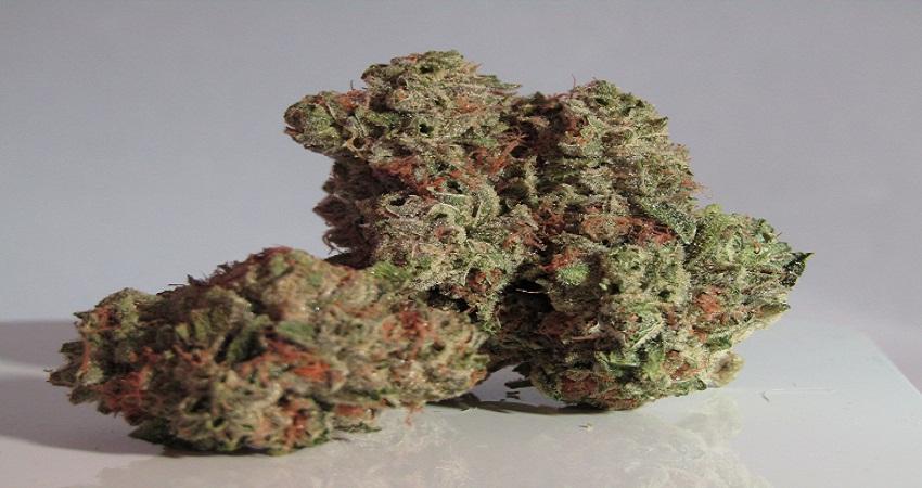 Tips To Grow Cannabis