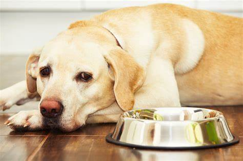 cbd oil for dogs cancer