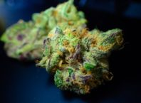 health benefit of weed