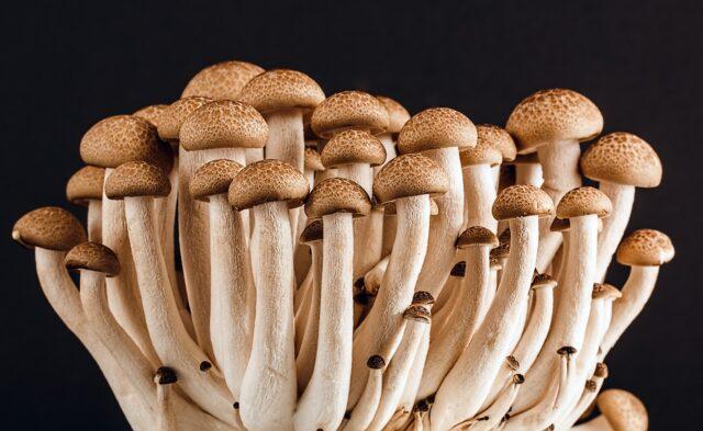 are mushrooms keto